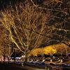 【2018】立川の国営昭和記念公園で冬のイルミネーションが12月開催!
