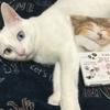 【掲載のお知らせ】フェリシモ猫部「にゃんこのぷにぷに肉球手帳2019」に掲載されました。