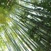 五月の鎌倉③ 竹林の報国寺で抹茶を堪能