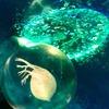 七色の光に浮かび上がる水滴に閉じ込められた超リアルな「ミジンコ」が美しい…。プランクトン・シリーズSO-TA【ガチャガチャ】