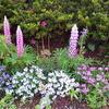 5月7日 今月の花