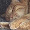 10月2日 目白台から護国寺の猫さま とその情景