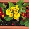 3・11 東日本大地震災から8年。「♪花は咲く」。東北出身の「私は何をしただろう?」