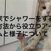 猫を家でシャワーをする時の方法から役立つアイテムの紹介と様子について