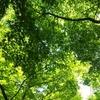 深緑の鎌倉