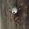 擬態するおもしろい動物たち【虫たちのいろんな擬態の例を紹介】