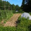私の畑、2代目みつばちファーム