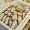 2020年2月13日 小浜漁港 お魚情報
