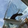 都内の水族館  サンシャイン水族館(池袋)に行ってきました