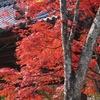 京都洛西地区散策(きぬかけの道~出町柳駅)