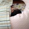 昼寝の攻防戦