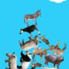 動物を積み上げていくゲーム「どうぶつタワー」が面白い!