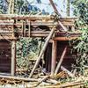 原始林のたまご