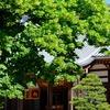 5/28 西明寺ベルツ博士の菩提樹