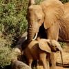 旅のキヲク⑤ 偉大なるアフリカン・サファリー東アフリカで その1