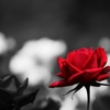 「鉢植えの薔薇」と「砂漠に根を張る巨木」(家庭連合にペンテコステ起こらずじまいの理由。)