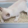 保護猫に出会ったら 第5回ートイレの介助、しつけー
