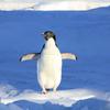 ペンギン・パンダアップデートからWelq事件までのSEOを振り返る