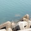 海釣り世界のブラックリスト 釣れたら気を付けたい魚15種類