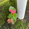 頑丈な花❗️
