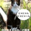 可愛い絵本「でんにゃ」の紹介-カラフルな絵と可愛い文章が子供と猫好きにオススメ-