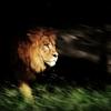 まだ間に合う!9月に行ける夜の動物園・ナイトサファリ3選!