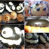 Xmas ケーキに飽きたら こんなオモシロ菓子パン どうでしょうかね ^^!