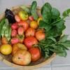 夏野菜が今まさに実りの時を迎えている