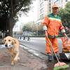 ゴミ掃除のおばちゃんと一緒にゴミ拾いをする愛犬が出現