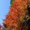 子連れで紅葉を見に♪定光寺へ