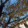 ★黄色い葉