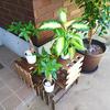 玄関を素敵にしてくれる観葉植物