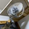 猫用和室にキャットドームを取り付けてみたら、、、
