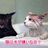 猫が水や雨が嫌いな理由は?