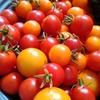 楽しみトマト
