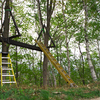 夢のツリーハウス「フォレスト・トライアングル」