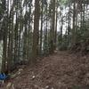 自伐型林業の見学