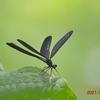 久しぶりに「蝶を訪ねて」来ました。