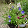 ミモザ・ガーデンの日記 秋の花