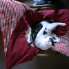 猫ブログ第十八弾 午後のミーさんの様子を覗きに帰ってみると……
