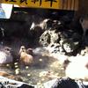 伊東カピバラ旅行:その2 カピ一家の露天風呂に悶絶!編