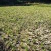 籾殻の燻炭やわらを撒く作業