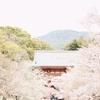 カメラ好きの大学生が巡った京都の桜の名所5選。