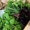 規制緩和されたドイツから、学校の様子など〜旬のお野菜と手打ちうどん