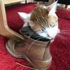 猫と嗜好(好きな物は人と猫それぞれ)