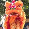 香港の正月イベント!1月はドラゴン&ライオンダンス祭!