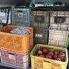 恒例のリンゴ運搬‥