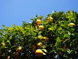 さくらんぼに甘夏みかん、メロンまで!いまが旬の果物狩りスポット