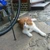 猫ちゃー の 雨宿り?