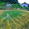 庭先キャンプ2(芝生計画)